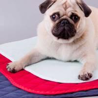 Многоразовые  пеленки для собак.